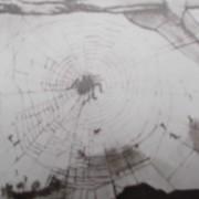 Une araignée, sur sa toile tendue, se promène au-dessus d'une ortie - Détail d'un dessin de Victor Hugo.