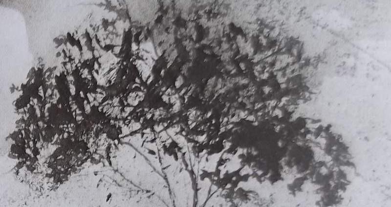 Ce détail d'un dessin de Victor Hugo représente le sommet d'un arbre, nichée des petits oiseaux.