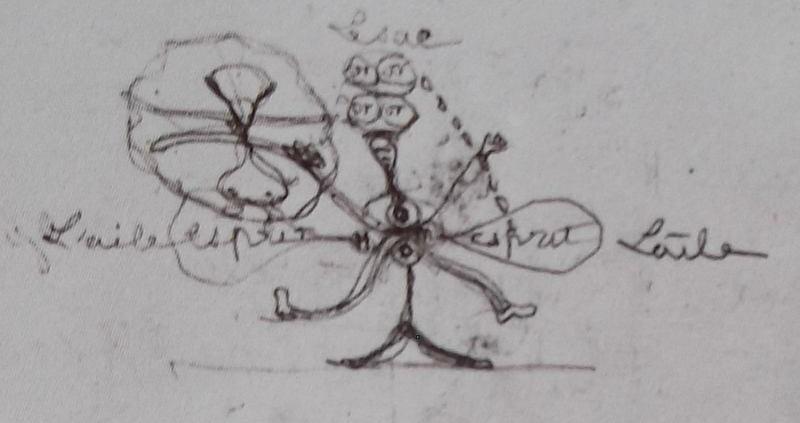 Ce détail d'un dessin de Victor Hugo, flou, représente un homme au tronc minuscule et aux membres démesurés, possédant trois paires d'yeux, dont deux sur la tête et une, verticale, dans le corps.