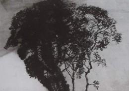 Ce détail d'un dessin de Victor Hugo représente un cœur formé par trois arbres enlacés.