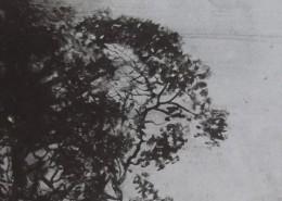 Ce détail d'un dessin de Victor Hugo représente des frondaisons.