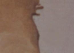 Ce détail d'un dessin de Victor Hugo représente les yeux, le nez et la bouche boudeuse d'un profil renversé de femme, dont on a supprimé l'œil.
